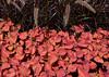 botanicalGardens-4185