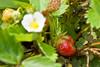 botanicalGardens-4288
