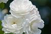 botanicalGardens-4321