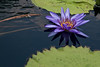 botanicalGardens-4247