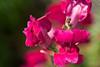 botanicalGardens-4286