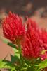 botanicalGardens-4223