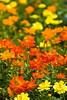 botanicalGardens-4293