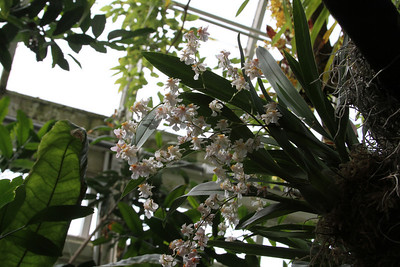 NYBG Orchid Show 3 18 2011 023