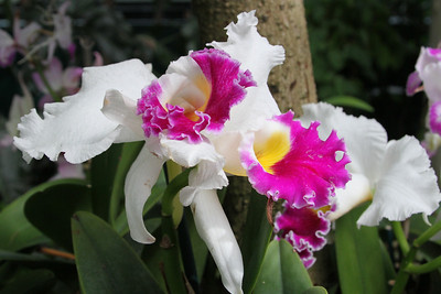 NYBG Orchid Show 3 18 2011 037
