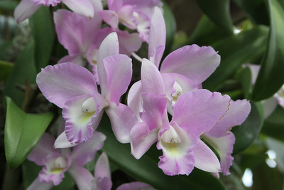 NYBG Orchid Show 3 18 2011 031