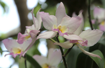 NYBG Orchid Show 3 18 2011 036