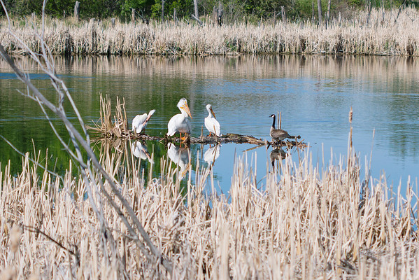 Wetlands,Sherwood Park, AB