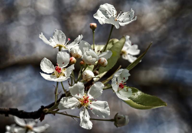 February Spring