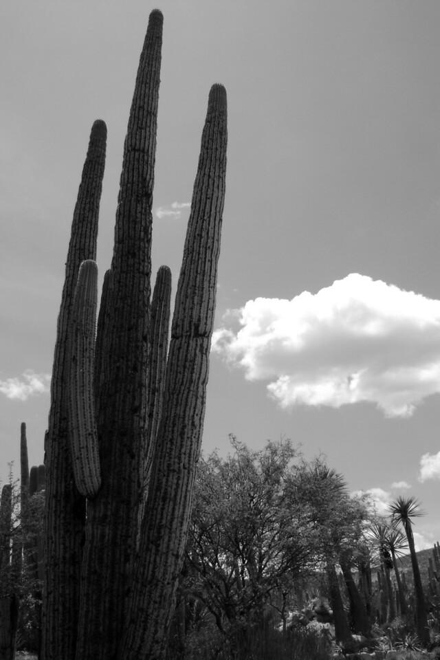 San Antonio, Texcala, Puebla, Mexico
