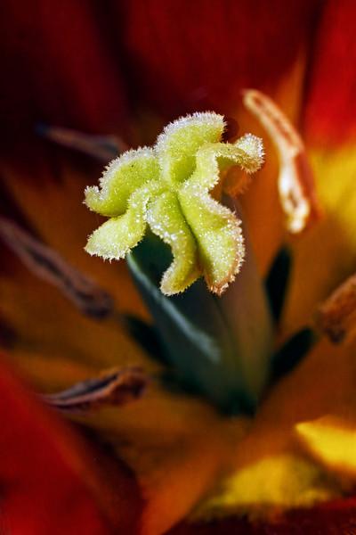 Tulip Confidential