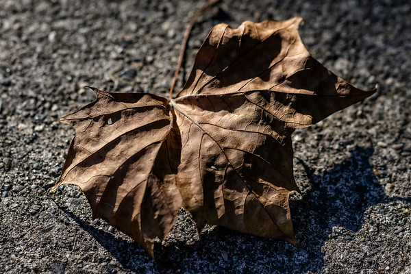 Street Leaf