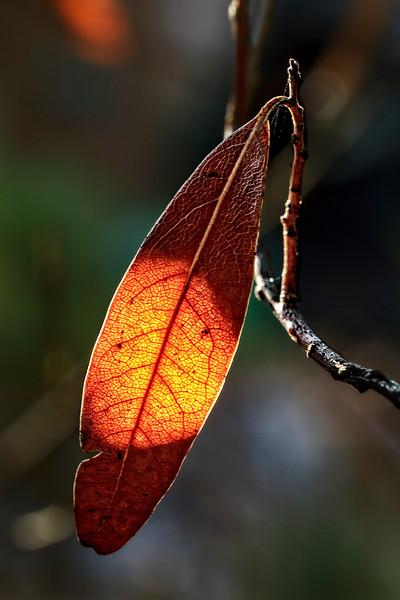 Brighter Leaf