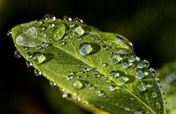 Dew Fall Early