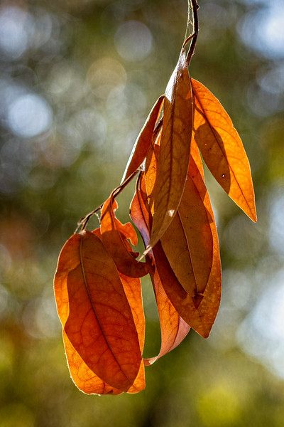 Fall Comes Again