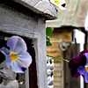 Back Deck pansies. I used a chest of drawers with wicker baskets for the display. Painted white to show the colors !<br /> May 2014