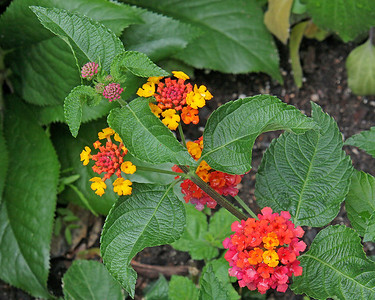 New York Botanical Garden flowers