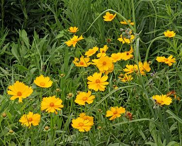 Flowers at New York Botanical Gardens