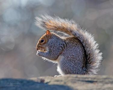Squirrel at The New York Botanical Garden, NY.