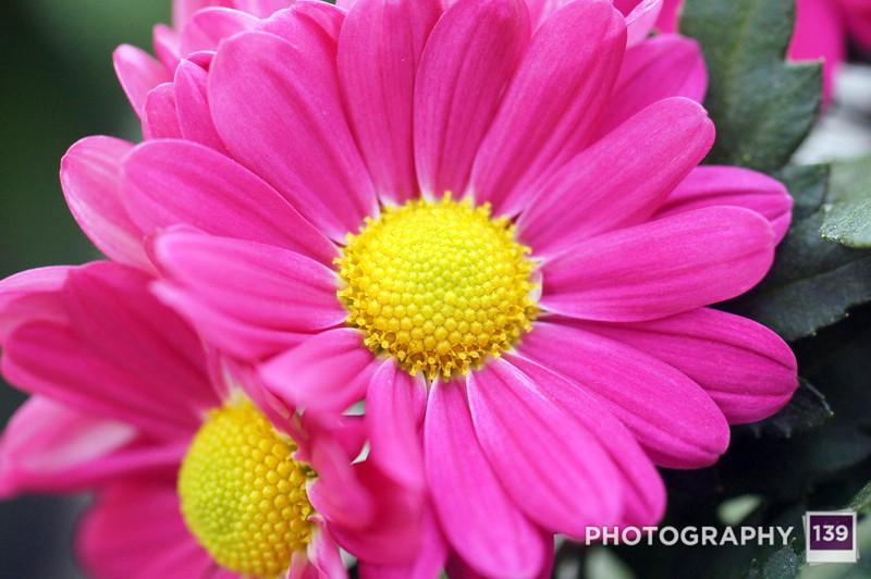 Plant Happiness - 2012