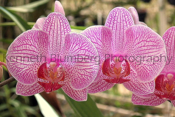 ORCHID FILE