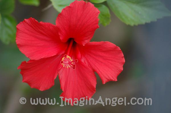 Orange County Flowers