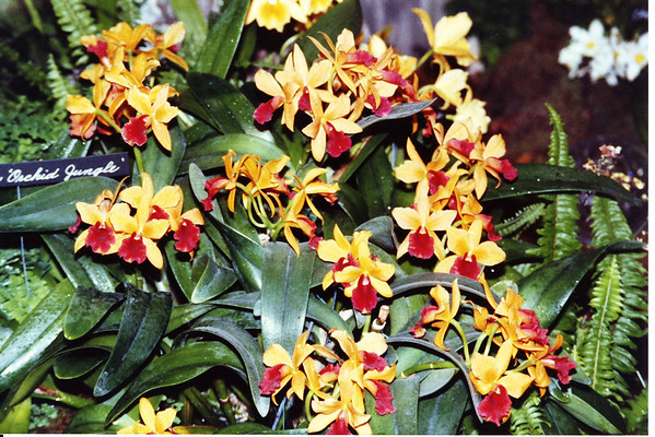 Orchid Jungle (Homestead,Florida)