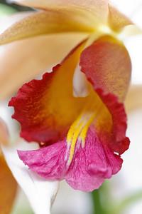 Orchid Macro 001