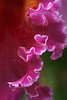Orchid 008