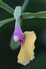 Orchid 013