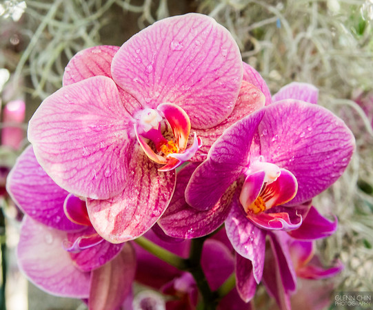 20140308_Orchid Show_39
