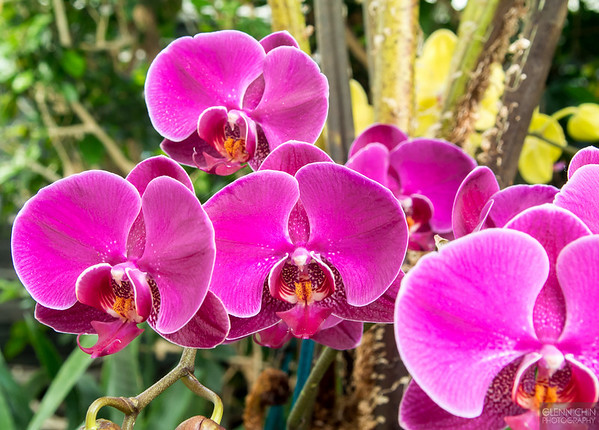 20140308_Orchid Show_67