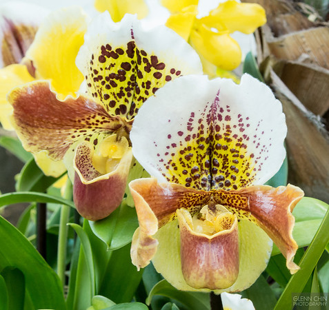 20140308_Orchid Show_78