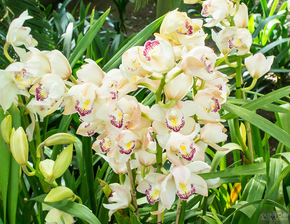20140308_Orchid Show_27