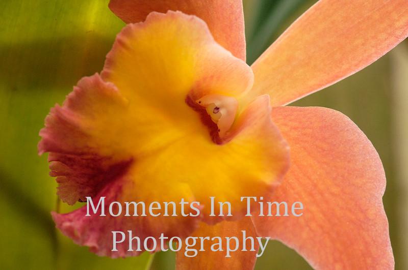 Pastel orchid