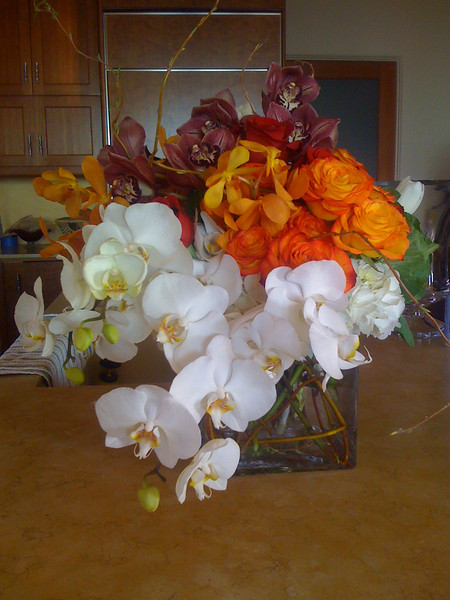 Orchids & more