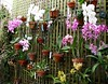 Wall of orchids, Fairchild TropGrdn, Miami