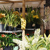 Entry through Cymbidium section 1
