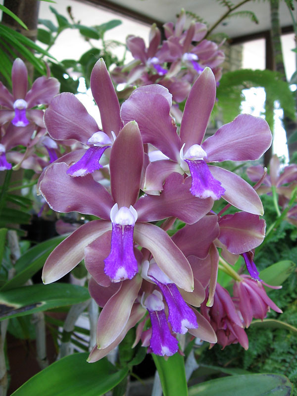 Delicate blue and lavender orchids.