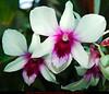 03-19-2006-D70-006