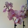 Orchid-03182013-092255.jpg