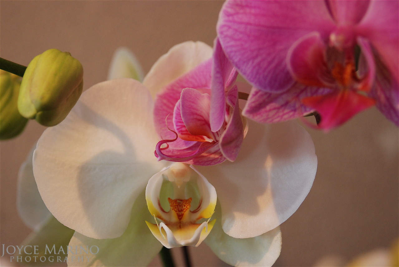 Orchids -- DSC_0107