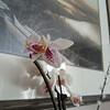 Orchid-03182013-092057.jpg