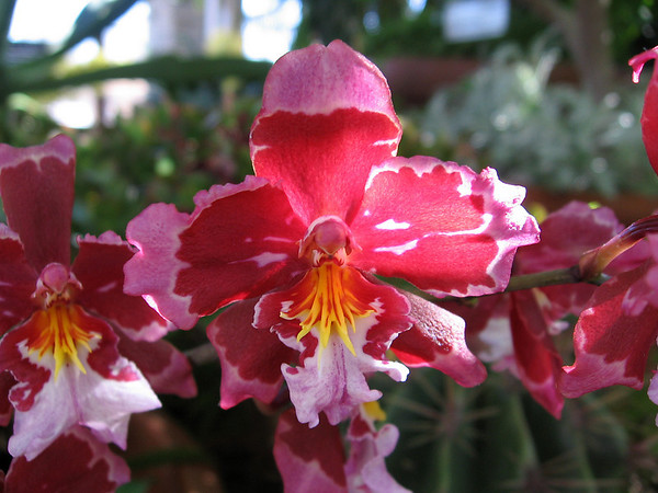 beautiful pink and red orchids