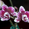 Orchid-042610_174059(2)