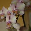 Orchid-06232014-060946(f).jpg