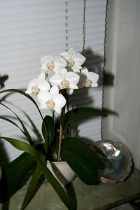 Franks orkideer