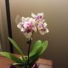 Mini Orchids-01082013-202527