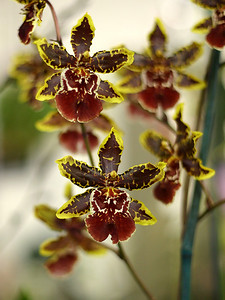Orchid 2 (40520391)