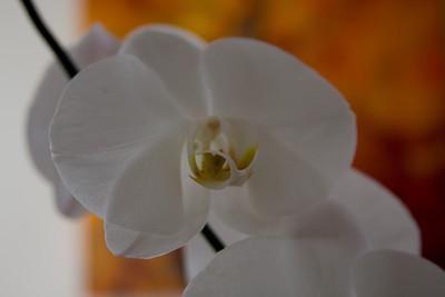 Orquids 2008